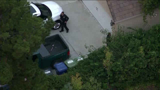 black bear tranquilized after running through a residential neighborhood in los angeles on october 28 2013 in los angeles california - 鎮静薬点の映像素材/bロール