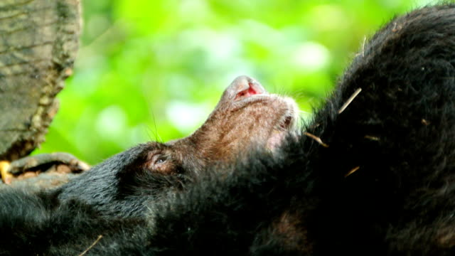 black bear - standing out from the crowd stock videos & royalty-free footage
