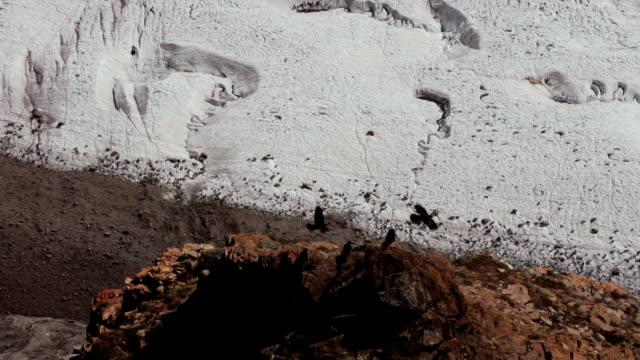 black birds flying over glacier in Alps