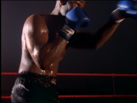 black boxer with blue gloves shadow boxing in ring / black background - boxer dog stock videos and b-roll footage