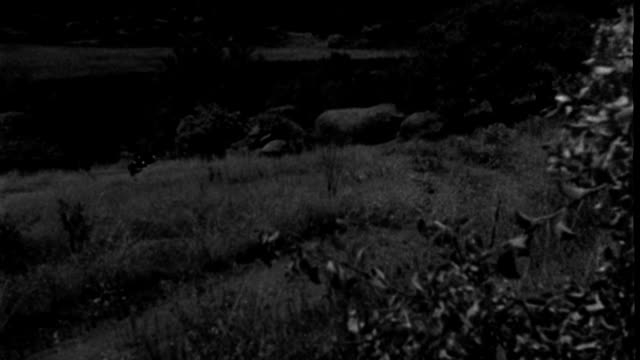a black buick drives up a grass hill. - 1939 stock videos & royalty-free footage