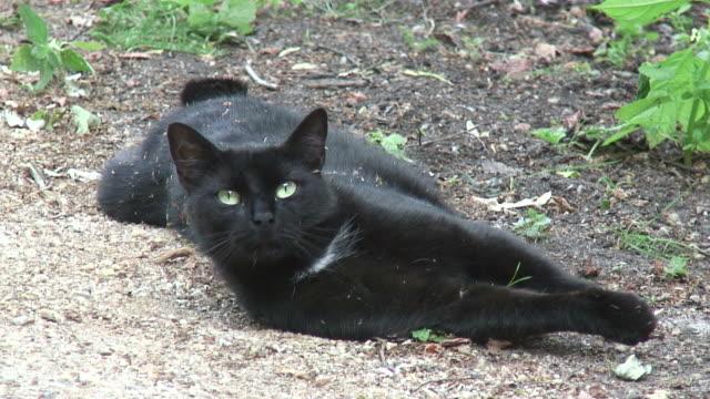 黒色、cat 2 -hd 1080 /60 i - 黒猫点の映像素材/bロール