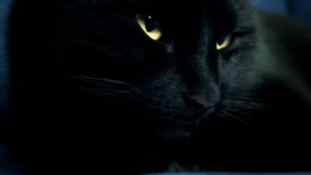 HD: Black Cat Awakening