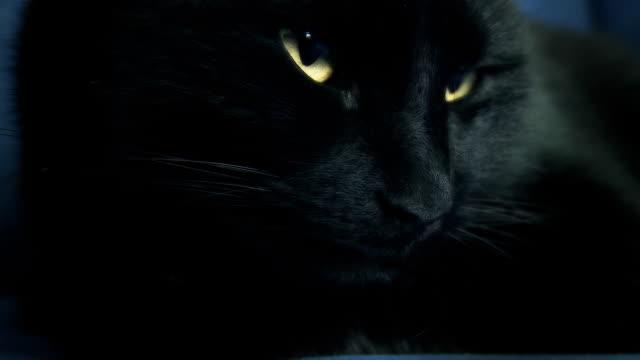 hd: black cat awakening - retina stock videos & royalty-free footage