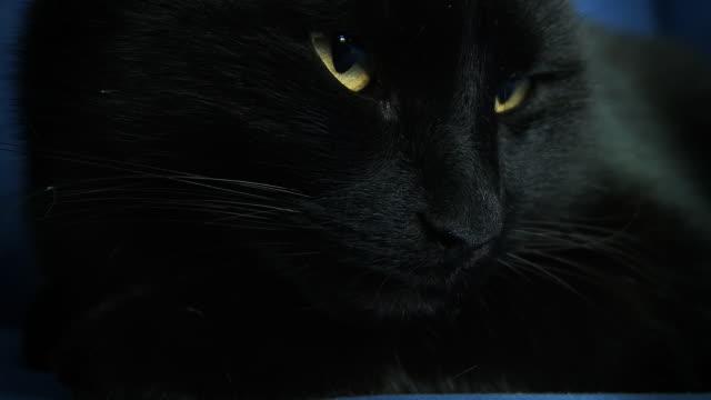 hd: black cat awakening - retina stock videos and b-roll footage