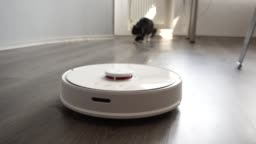 Black cat chasing smart robot vacuum cleaner with interest