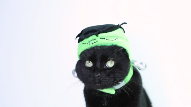 black cat dressed for halloween - cute stock videos & royalty-free footage