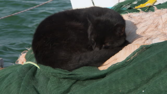 a black cat falls asleep on a pile of nets and rigging by a fishing boat - 黒猫点の映像素材/bロール