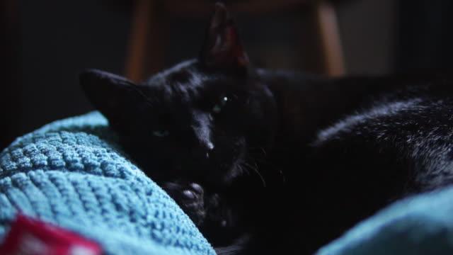 Black cat having a nap.