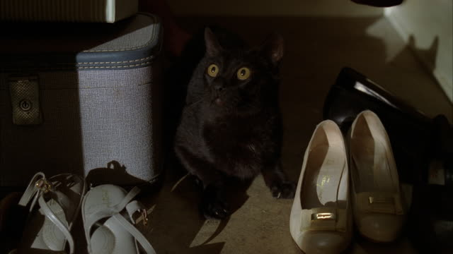 a black cat hides in a shoe closet. - 隠れる点の映像素材/bロール