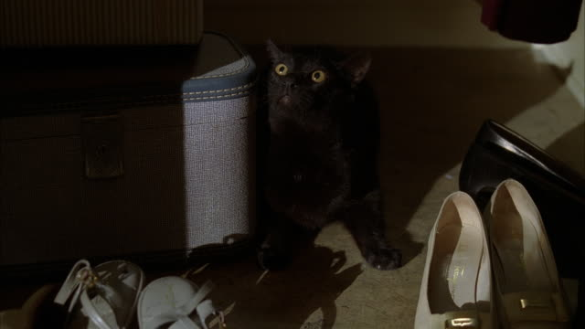 a black cat hiding behind a suitcase. - 隠れる点の映像素材/bロール