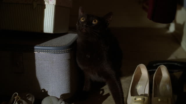 a black cat hiding while hissing in a shoe closet. - 隠れる点の映像素材/bロール