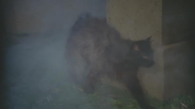 black cat in cemetery - night - 黒猫点の映像素材/bロール