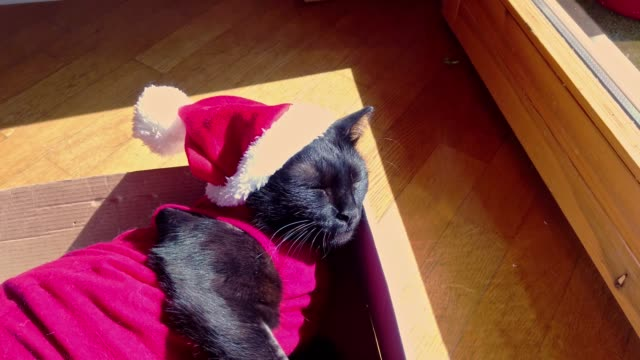 black cat in christmas dress and santa claus hat resting on its box, resting and looking down, italy, europe - santa hat stock videos & royalty-free footage