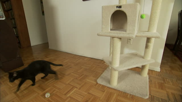 a black cat jumps down from a cat tower and walks away. - 黒猫点の映像素材/bロール