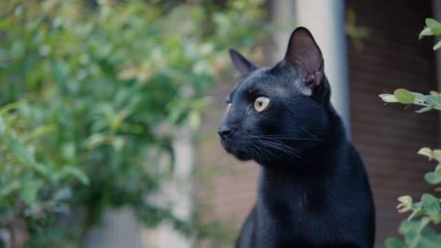 壁に黒猫。 - 黒猫点の映像素材/bロール