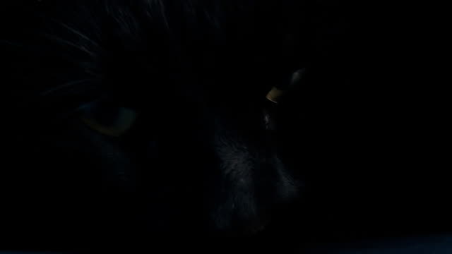 HD: Black Cat Opening Eyes