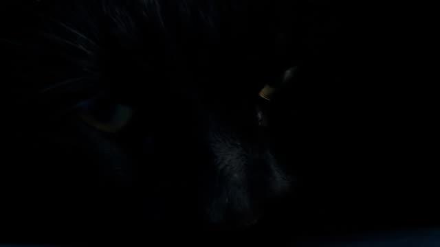 hd: black cat opening eyes - animal head stock videos & royalty-free footage