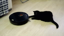 Black cat playing with robotic vacuum cleaner which is cleaning floor. 4K