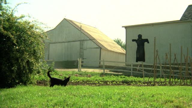 a black cat plays in the grass near a garden on an amish farm. - アーミッシュ点の映像素材/bロール