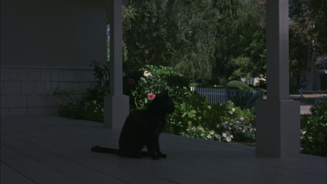 A black cat sits on a porch.
