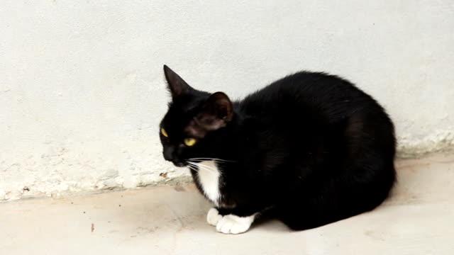 黒猫のシッティングエリアには、ホテル内の停止 - 黒猫点の映像素材/bロール
