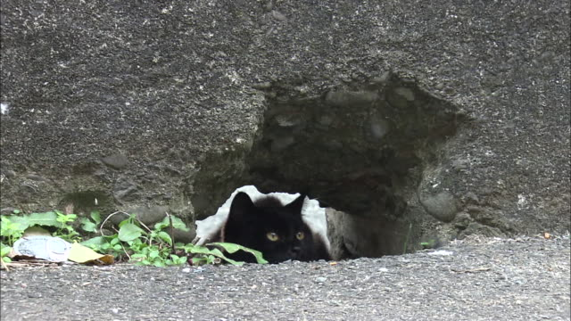 a black cat sitting inside a hole in a concrete wall, ainoshima, fukuoka, japan - concrete wall stock videos & royalty-free footage