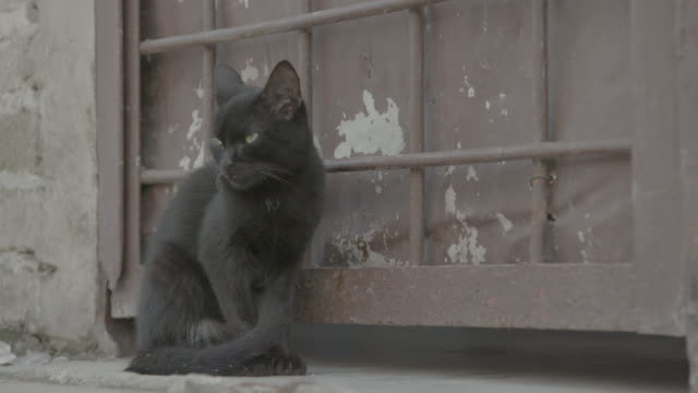 black cat sitting on window ledge - 黒猫点の映像素材/bロール