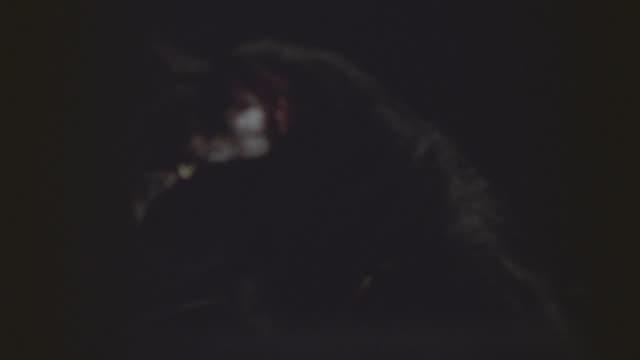 black cat to camera - 黒猫点の映像素材/bロール