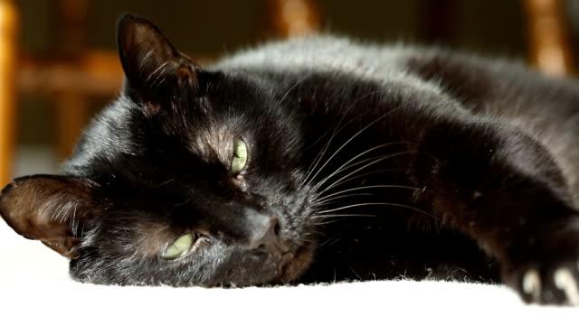 リラックスしようとしている黒猫 - 黒猫点の映像素材/bロール