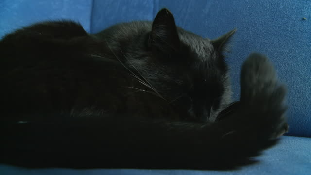HD: Black Cat Trying To Sleep