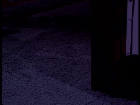 a black cat turns a corner in a house. - 黒猫点の映像素材/bロール