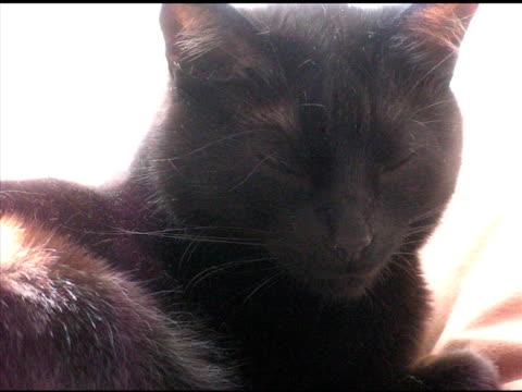 black cat (ntsc) - cat blinking stock videos & royalty-free footage