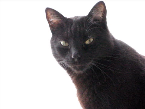 black cat - domestic animals stock videos & royalty-free footage