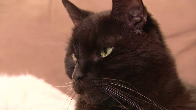 black cat - 黒猫点の映像素材/bロール