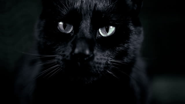 stockvideo's en b-roll-footage met black cat - woede