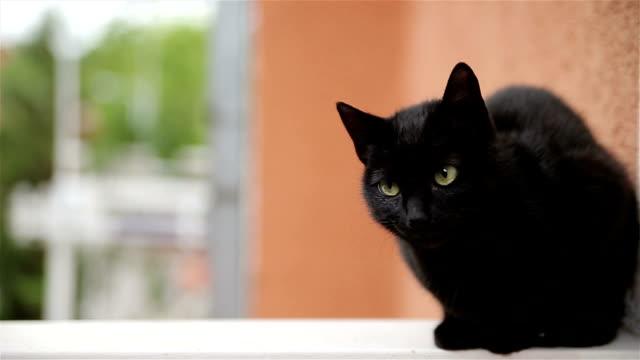 ブラックの猫  - 黒猫点の映像素材/bロール