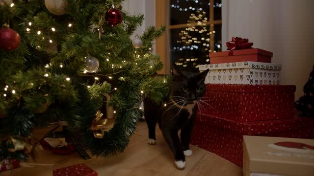 黑貓帶著禮盒穿過聖誕樹 - 少於10秒 個影片檔及 b 捲影像
