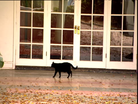 Black cat walks along path of derelict Ambassador Hotel Hollywood