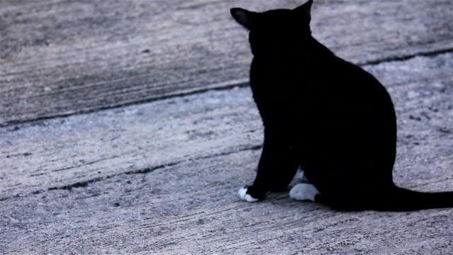 Black cat washing itself