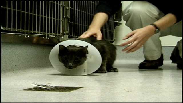 black cat with cone on its neck - kegel stock-videos und b-roll-filmmaterial