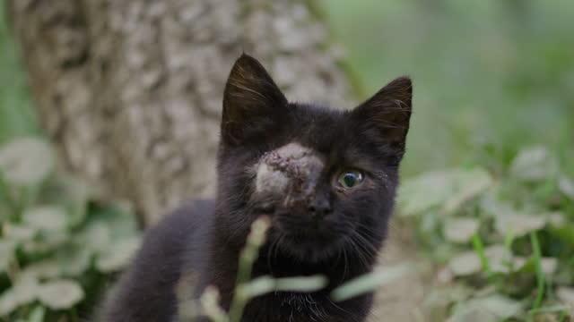 片目が草の上に座っている黒猫 - ショートヘア種の猫点の映像素材/bロール