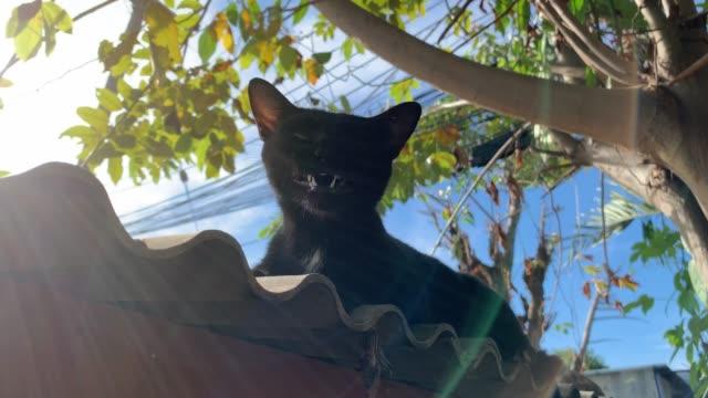 黒猫が日光で屋根の上であくびをする。 - 黒猫点の映像素材/bロール
