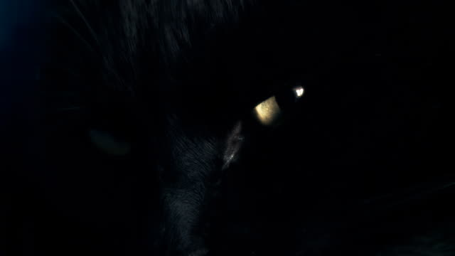 hd :ブラックのキャッツアイ型 - 黒猫点の映像素材/bロール