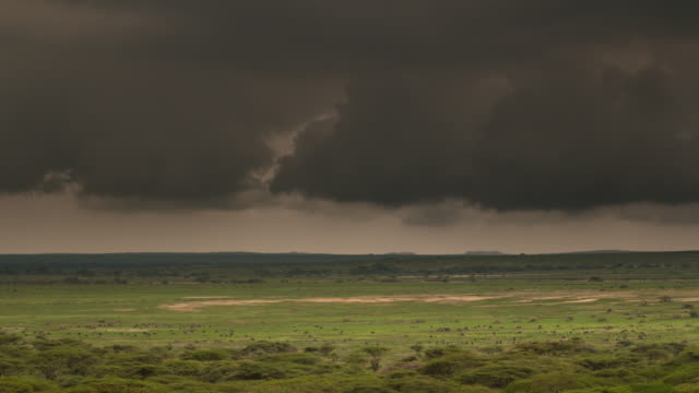 Black cloud overshadows grazing wildebeest far away