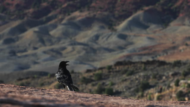 砂漠の環境で黒いカラス - ブライス峡谷点の映像素材/bロール