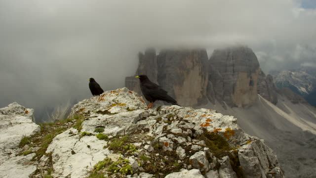 black crows in the alps, three peaks - perching stock videos & royalty-free footage