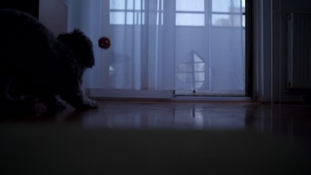 Schwarzer Hund jagt eine kleine Kugel