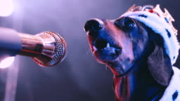 A black dog dachshund sings in outline on a microphone in front of a foggy smoky room