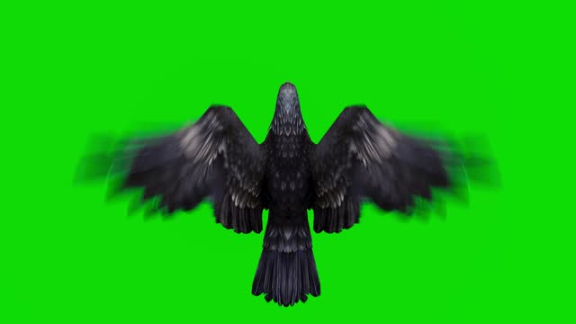 black eagle flying animation on green screen. the concept of animal, wildlife, games, back to school, 3d animation, short video, film, cartoon, organic, chroma key, character animation, design element, loopable - falcon bird stock videos & royalty-free footage